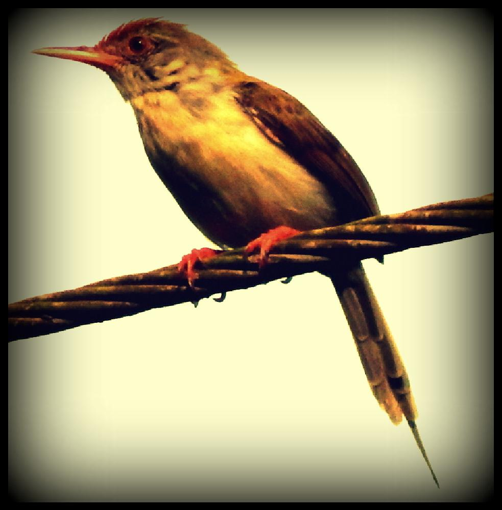 Photo in Portrait #bird #animal #natural #beautiful #scenic #sky #fly
