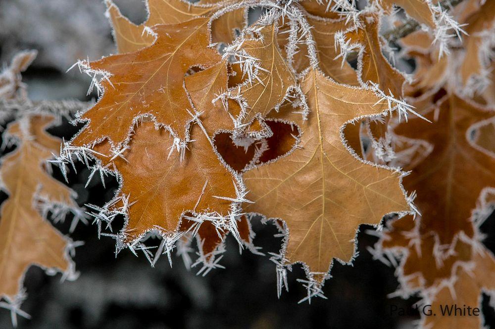 Photo in Nature #pogonip #frost #macro #followme #kodamaxphoto