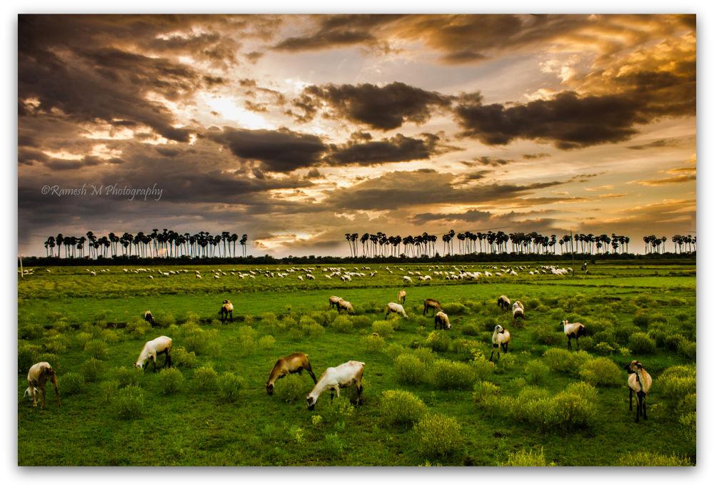 Photo in Landscape #vilupuram #parikal #village #nature photography #landscape photography #clouds #sunset #sunrise #tamil nadu village life #indian photography #ramesh m photography