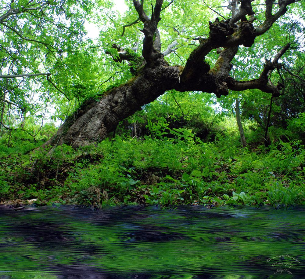 Photo in Nature #green #river #tree #nature #forest