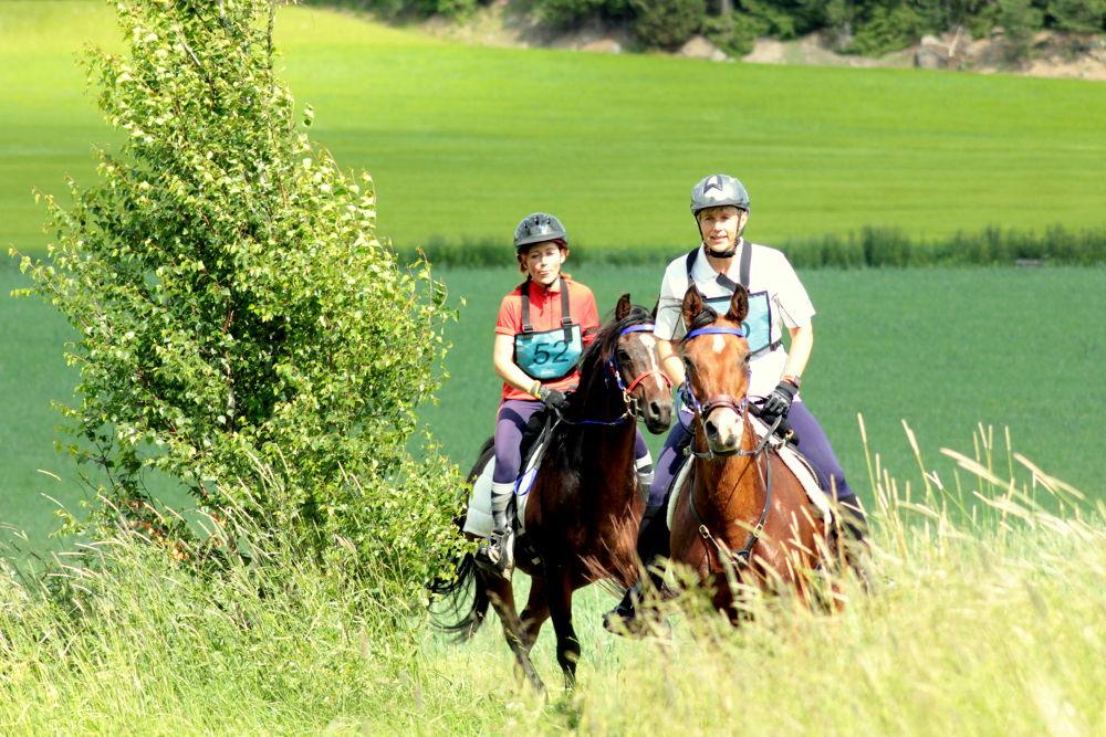 Photo in Animal #endurance #horses #riding #summer #race