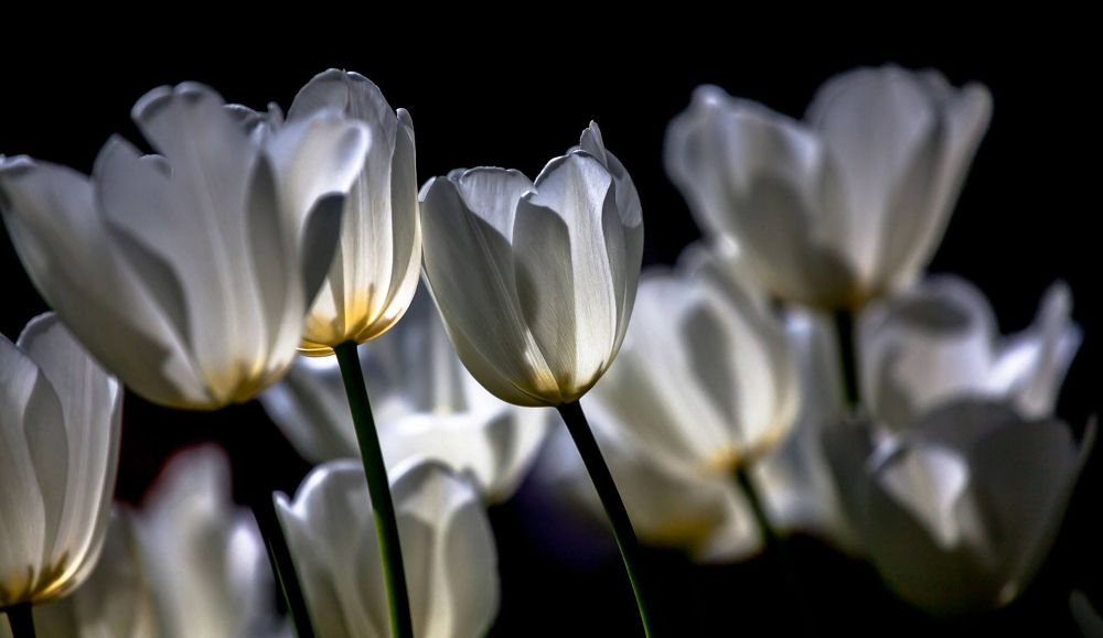 Photo in Macro #spring in the araluen garden