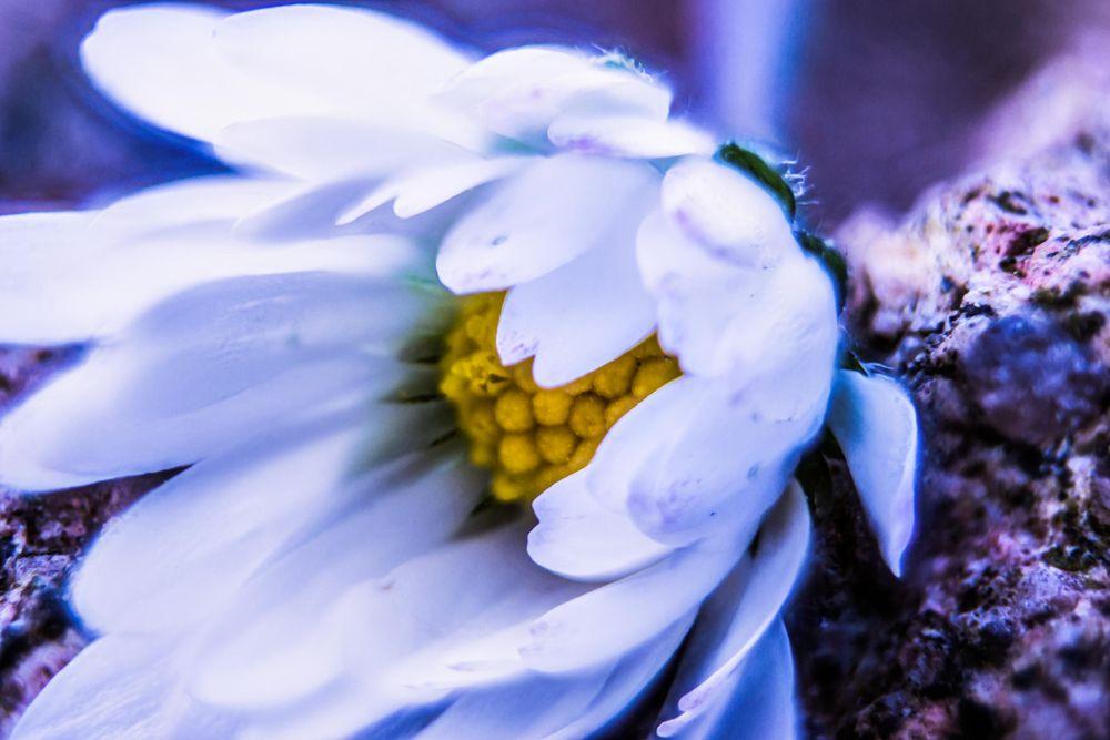 Photo in Macro #macro flower stacked
