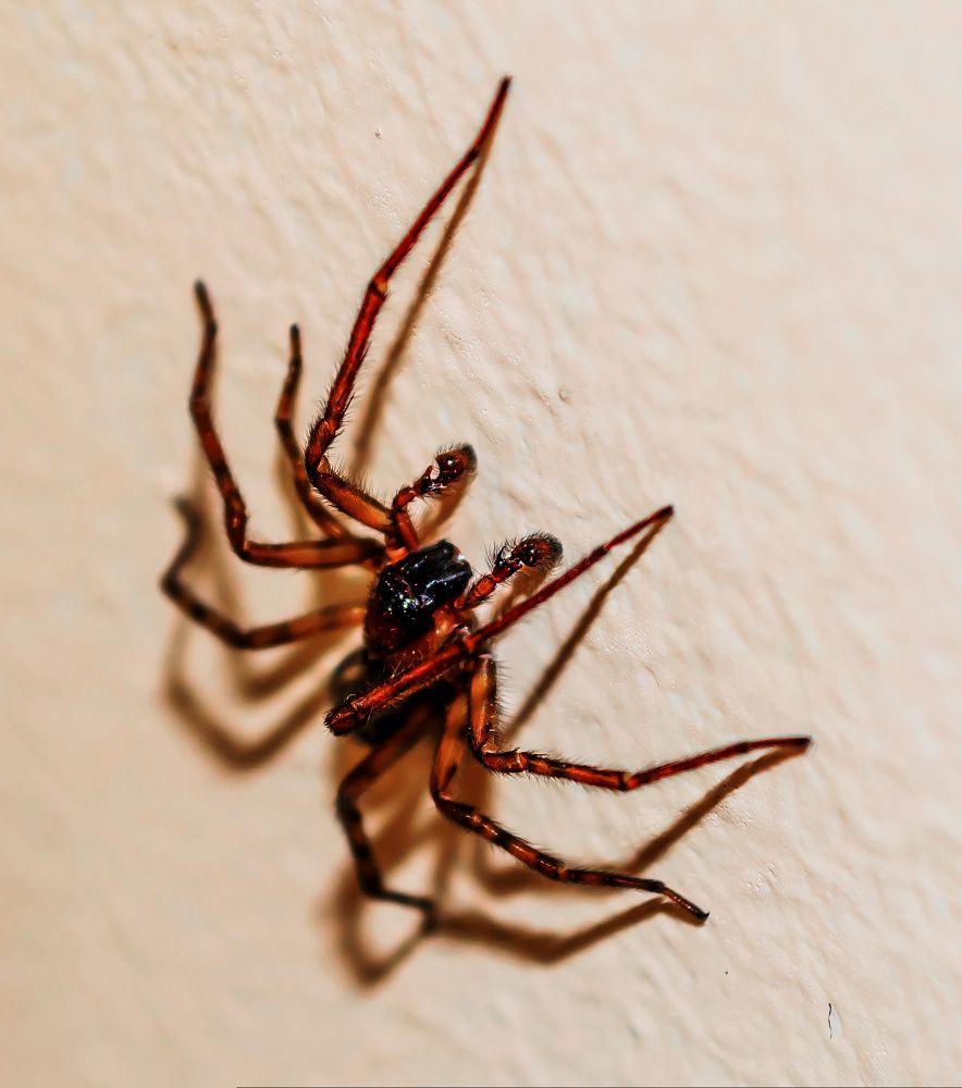 Photo in Macro #spider macro