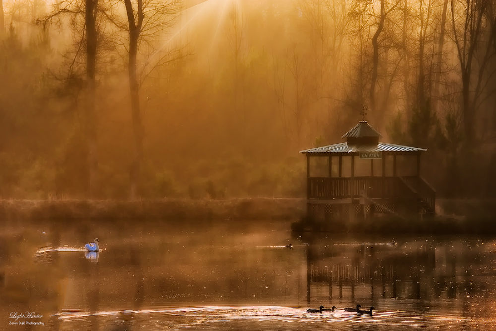 Photo in Random #swan lake #sunset