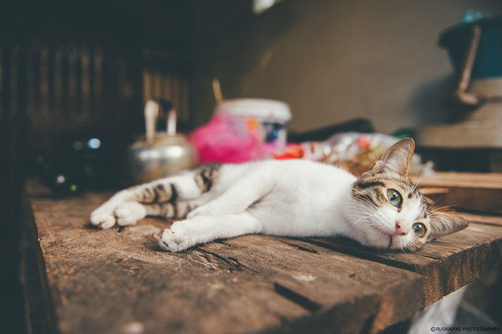 Photo in Animal #ruskapixs #freelance #photographer #photography #nikon #d3s #cat #animal #pet