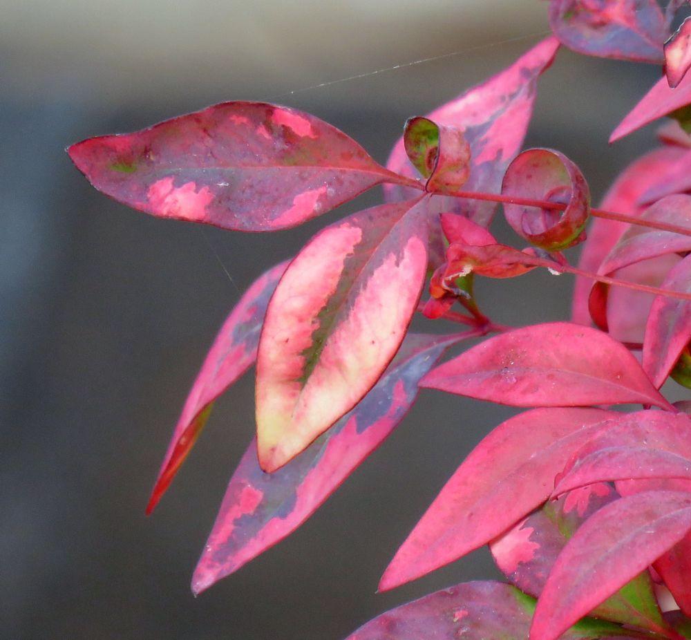 Photo in Macro #leaves