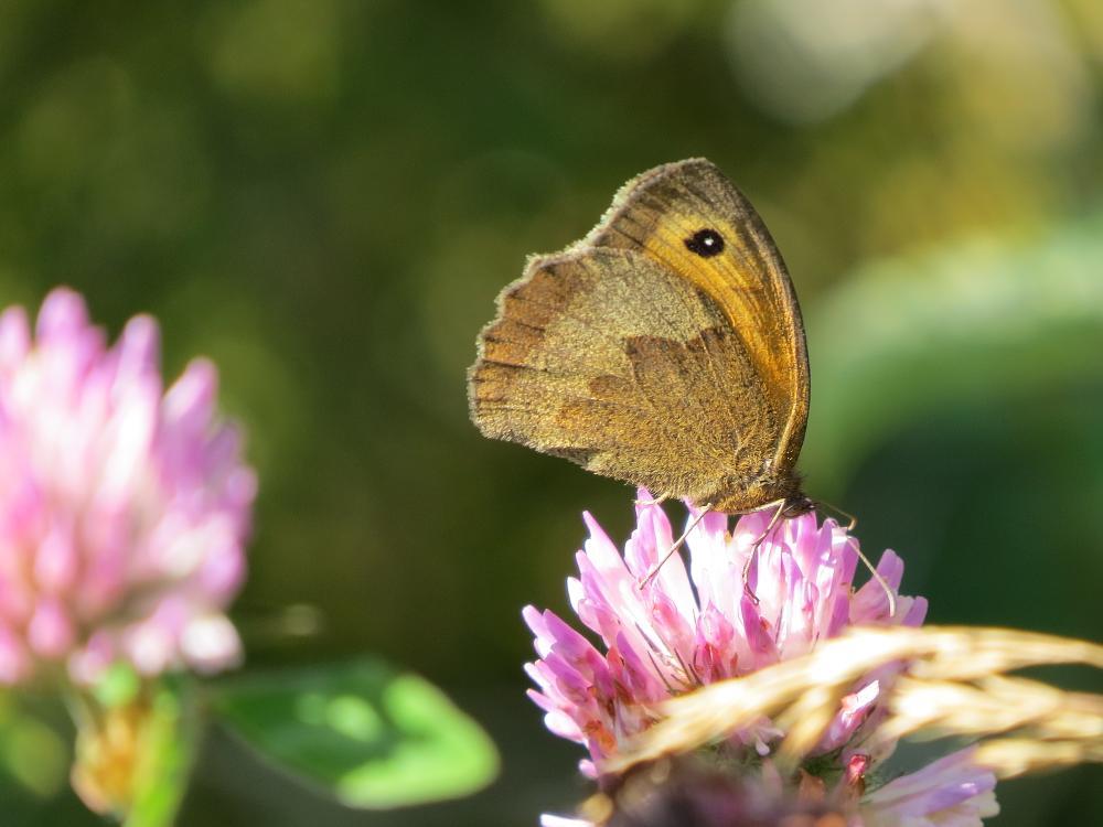 Photo in Macro #butterfly #macro