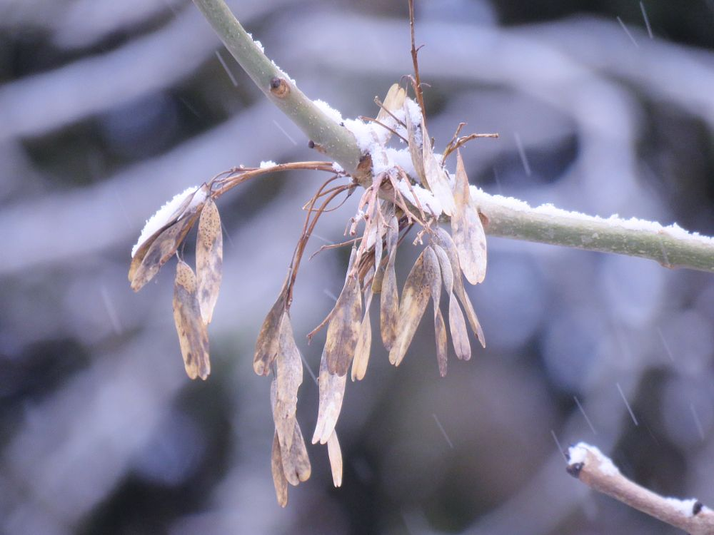 Photo in Macro #leaves #løv #snow