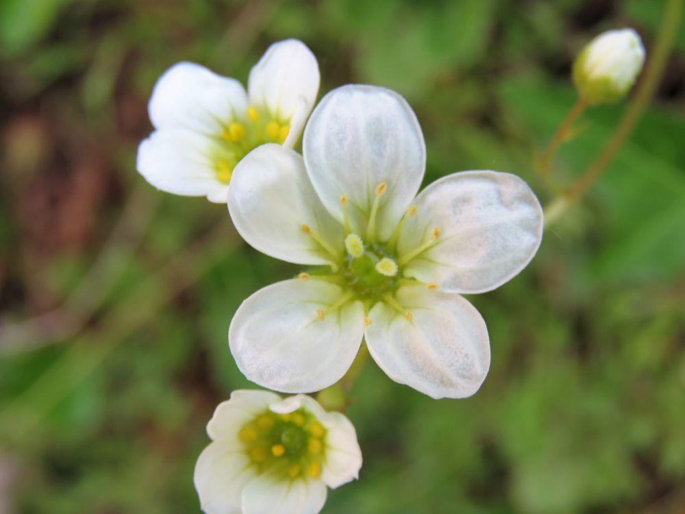 Photo in Macro #flowers #garden