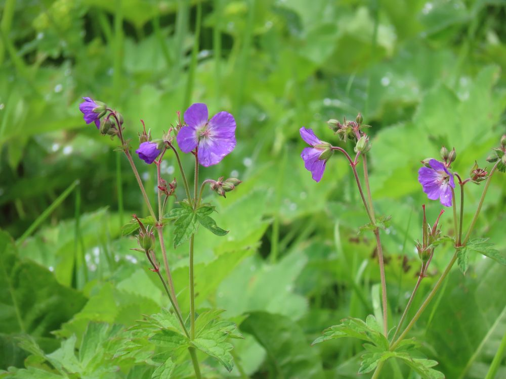 Photo in Macro #flowers #nature #macro