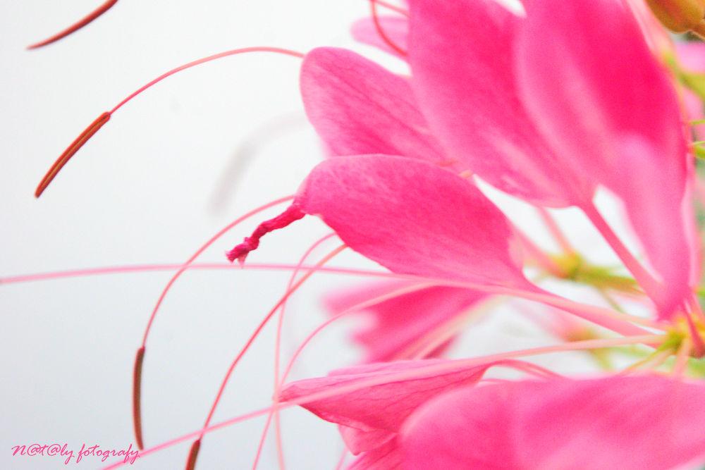 Photo in Macro #macro #flower #pink #petals