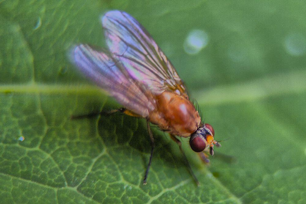 Photo in Macro #foto wang #fly #flue #mellomring #macro #2014 #odd rune wang
