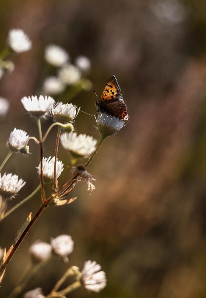 Photo in Nature #butterfly #flower #nature #summer