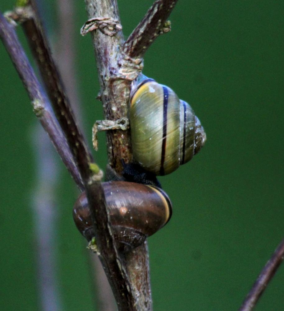 Photo in Macro #snails #macro