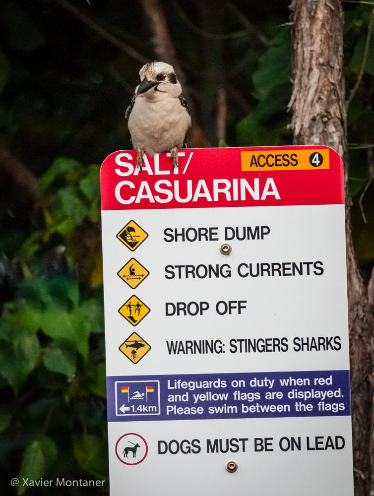Photo in Travel #australia