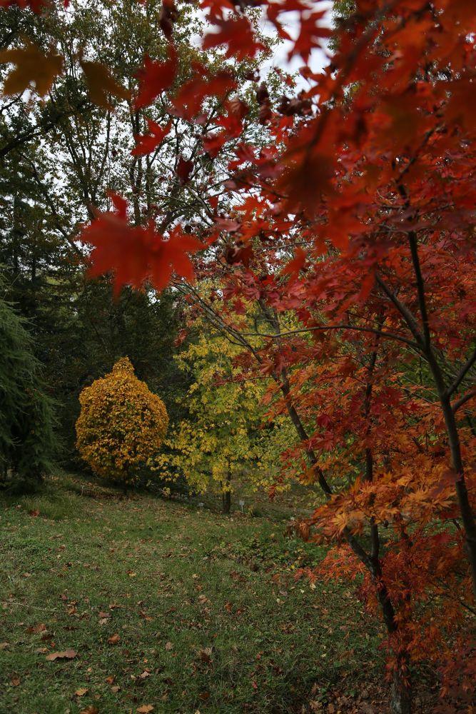 Photo in Nature #istanbul #turkey #arboretum #yumusakkaya #fall #tree