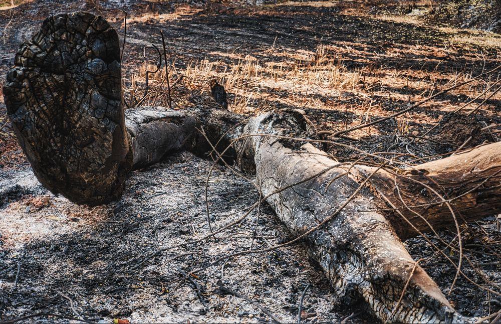 Photo in Rural #thailand #rice field #rice #farming #burned #fuijfilm #farm #wood
