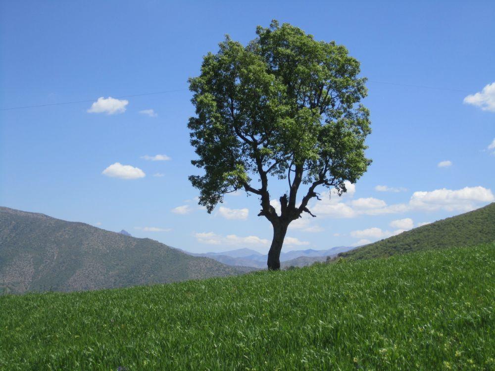 Photo in Random #tree