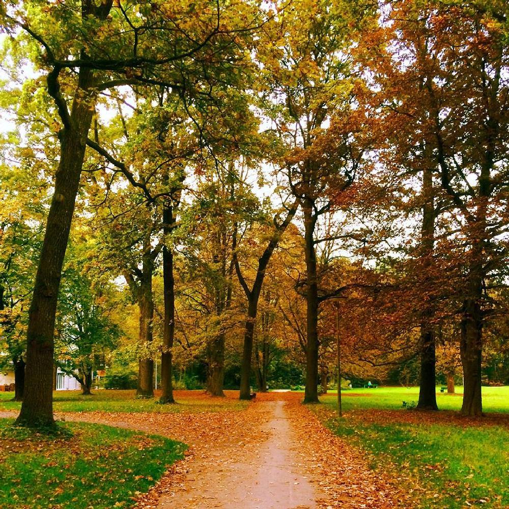 Photo in Nature #foliage #color #light #trees #autumn #race #park #impression
