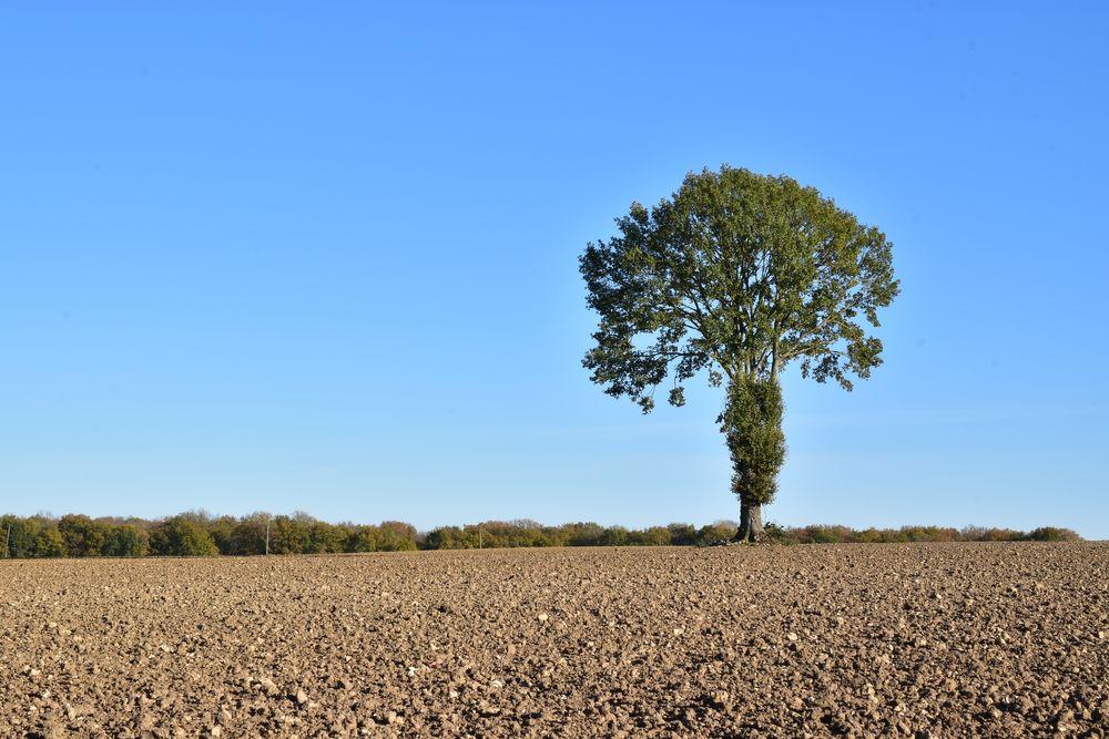 Photo in Landscape #landscape #tree #single #field #earth #sky #colour #blue #green #shackman #mike russell #the art workshop #november #2020