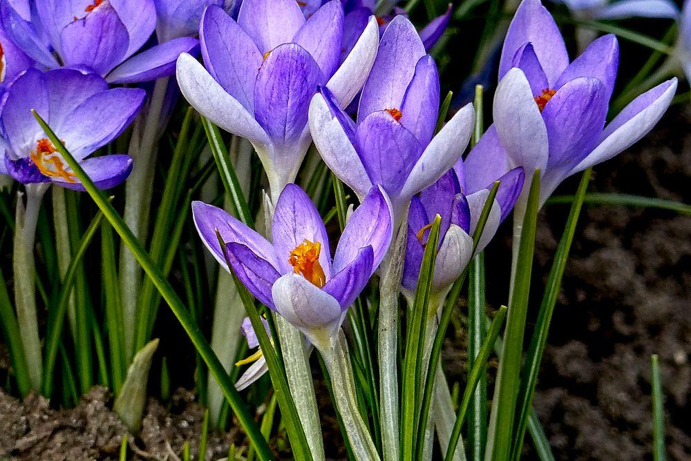 Photo in Macro #flowers #plant #garden #nature #jadwiga trzeszkowska #warszawa #polska