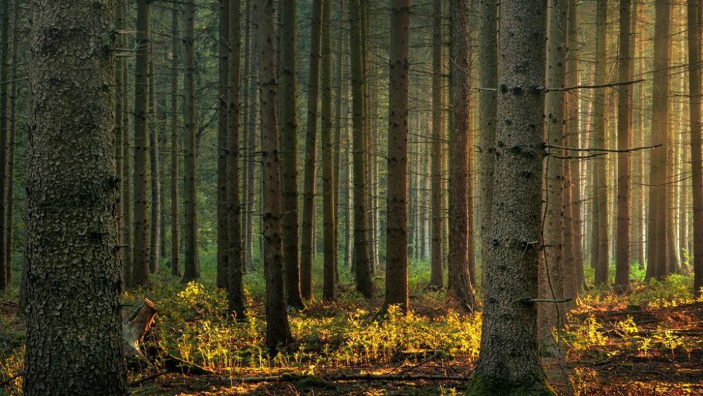 Photo in Fine Art #forest #morning #fine art #landscape #nature #wide angle