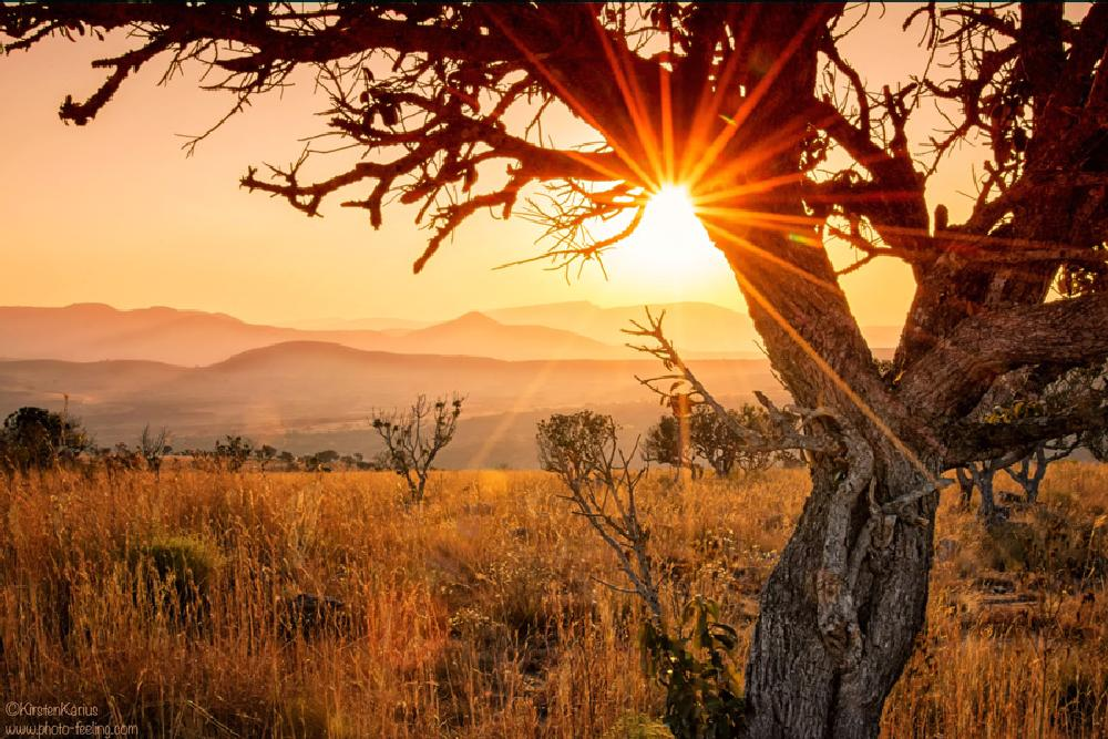 Photo in Landscape #landscape #tree #sunrays #sunset #south africa #kirsten karius #mountains