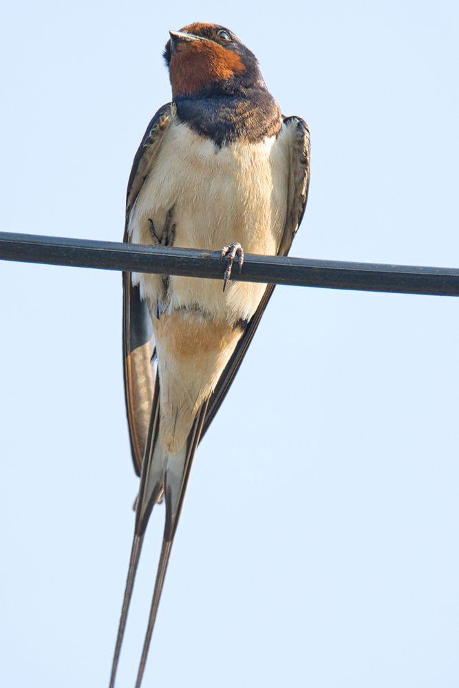 Photo in Nature #birding #birdwatching #national geographic #birdlife #tamron #birdshots #birdfreaks #birder #bbc_earth #natgeo #wildlife #wildlifephotography #belgrade #serbia #zlatibor