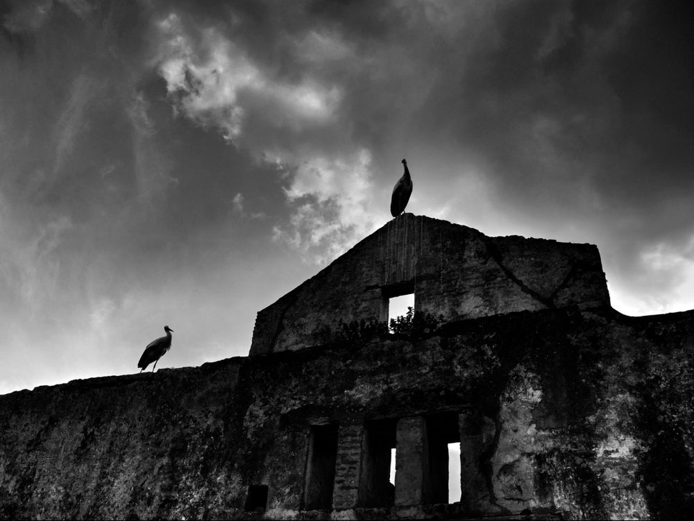 Photo in Random #landscapes #nature #world #birds #architecture #blackandwhite #animal #fineart #fine art #black and withe