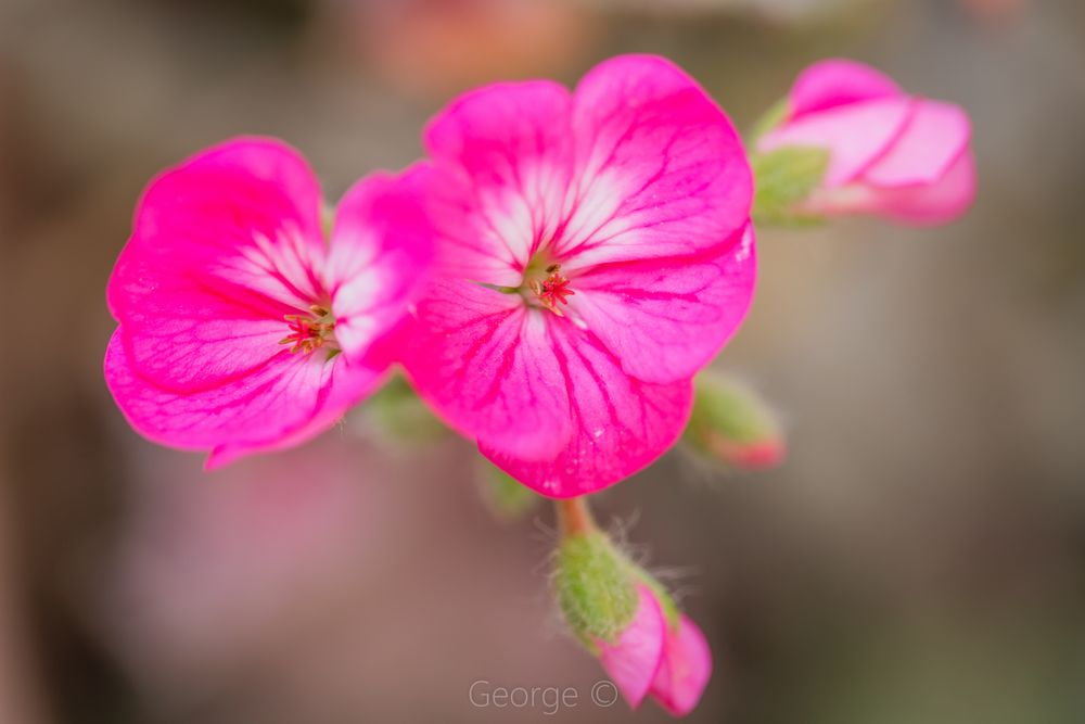 Photo in Macro #flower #pink #vibrant #blossom #fragile #colors #spring
