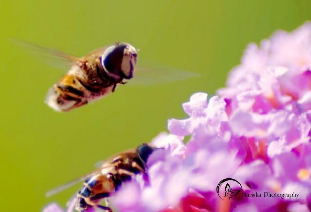 Photo in Random #macro #insect #nature #closeup