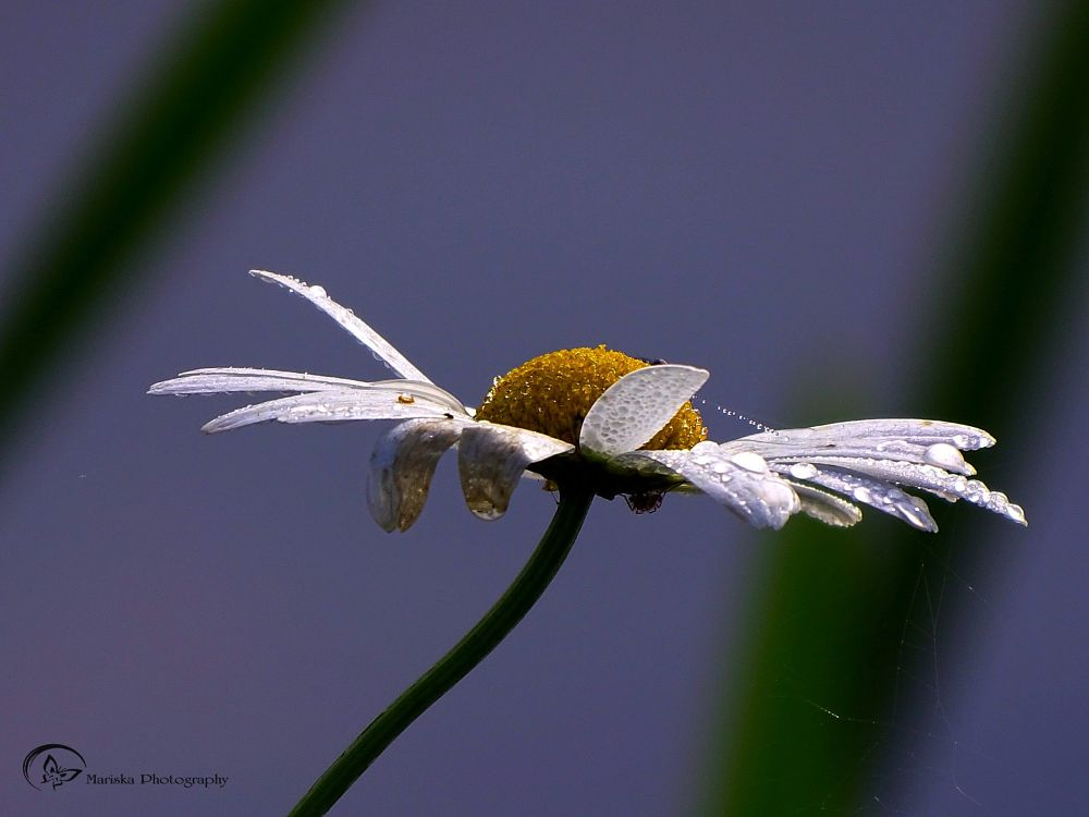 Photo in Macro #macro #nature #closeup #flower