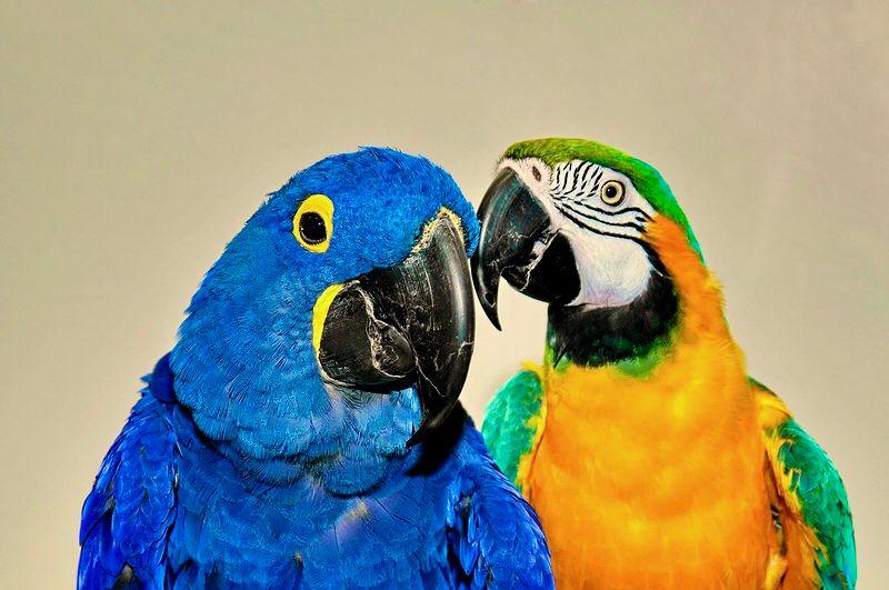 Photo in Animal #animal #bird #parrots