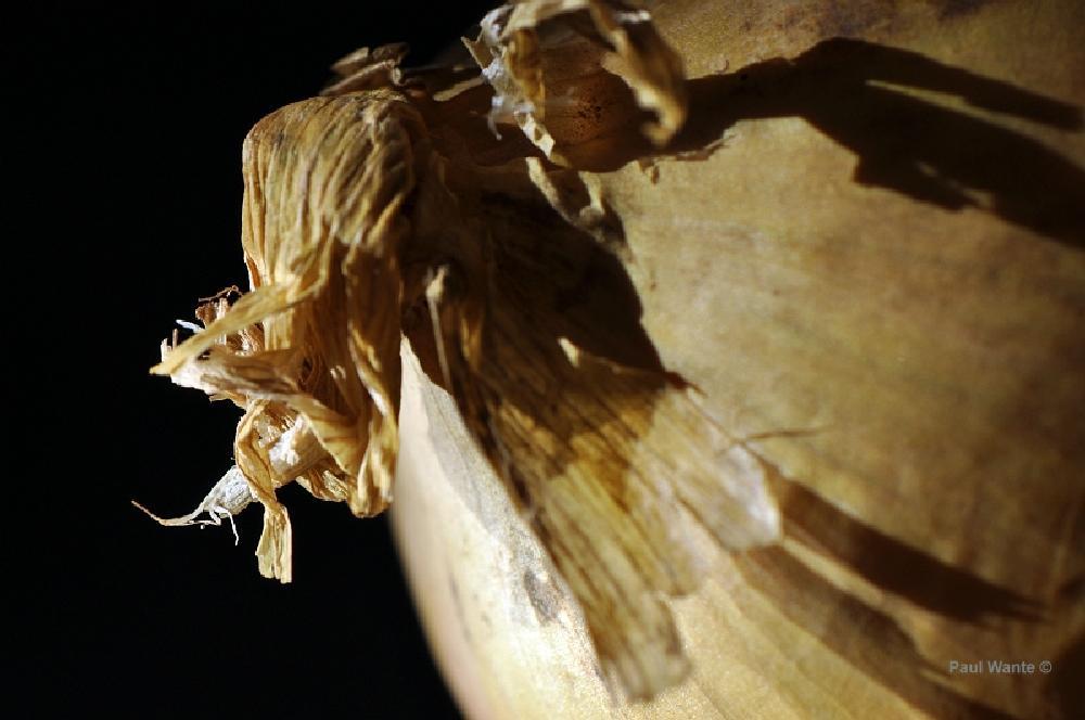 Photo in Macro #onion #tears