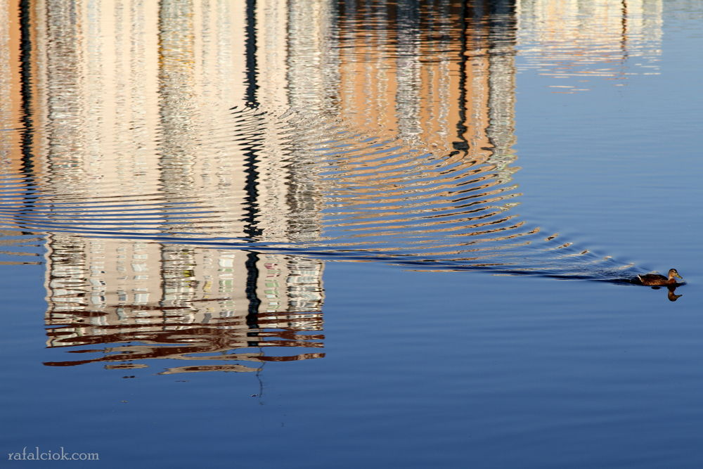 Photo in Cityscape #city #animal #duck #reflections #warsaw #animals #abstract #water #lake