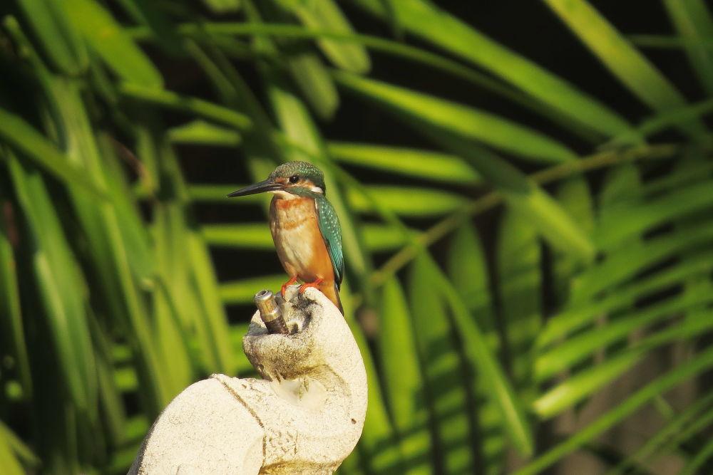 Photo in Animal #kingfischer #bird #nature #thailand