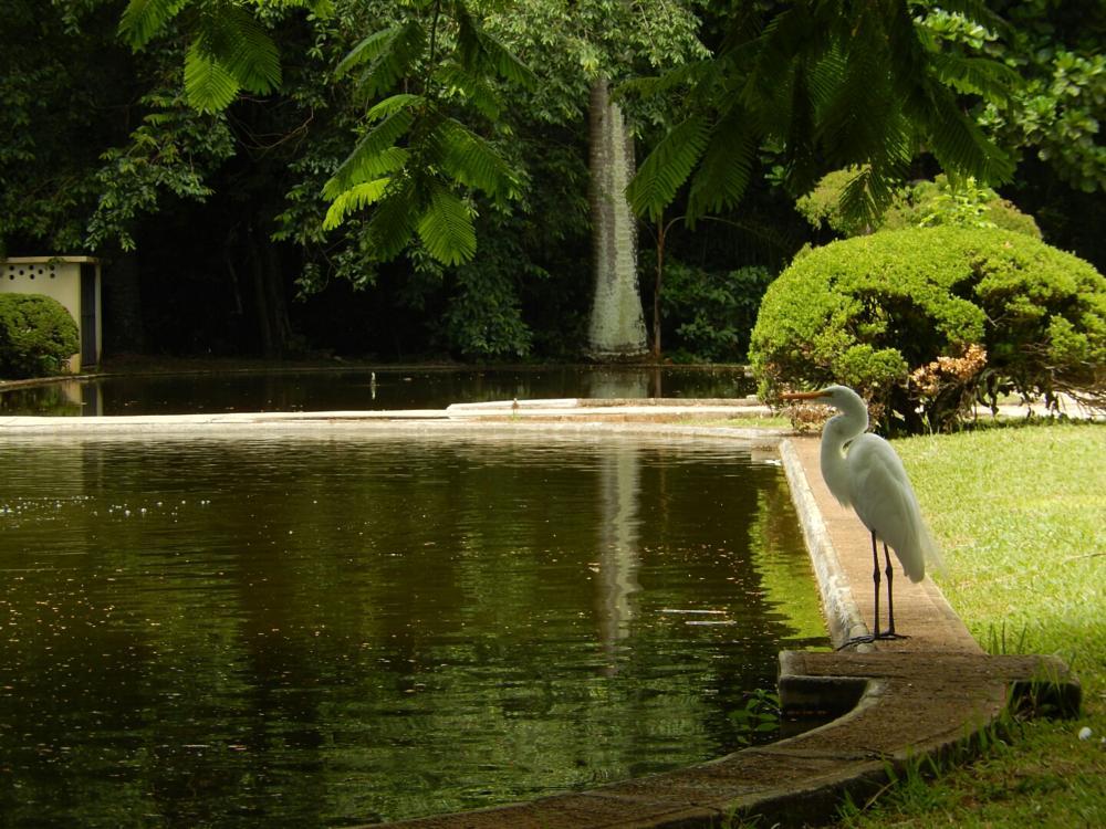 Photo in Animal #animal bird