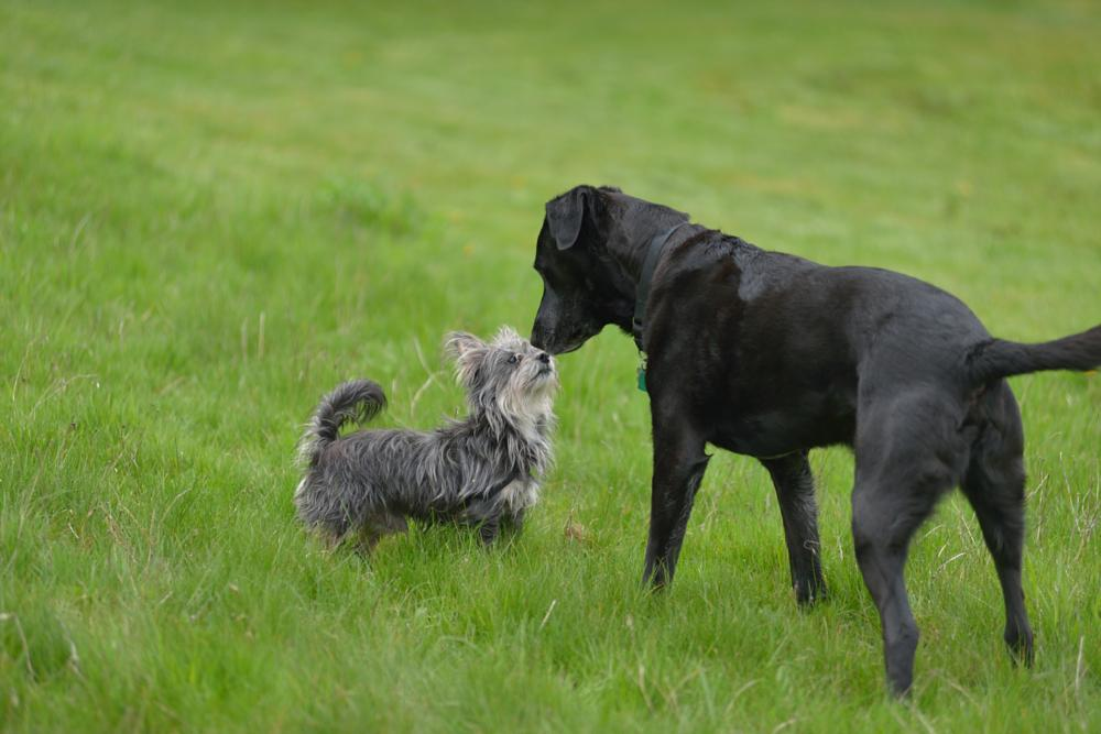 Photo in Animal #dogs #friendly #meeting