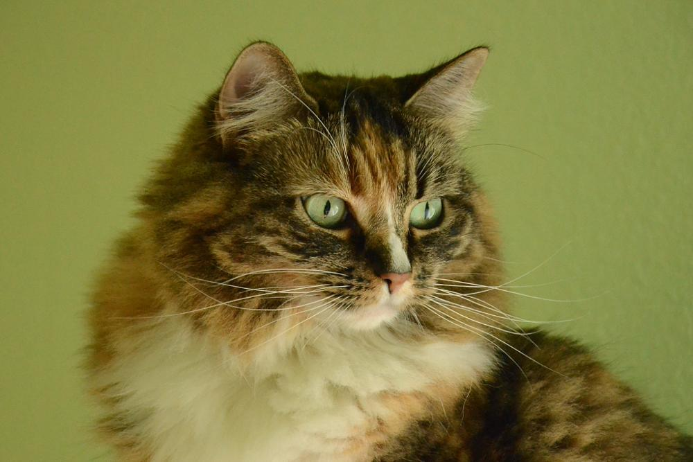 Photo in Animal #cat #feline #portrait