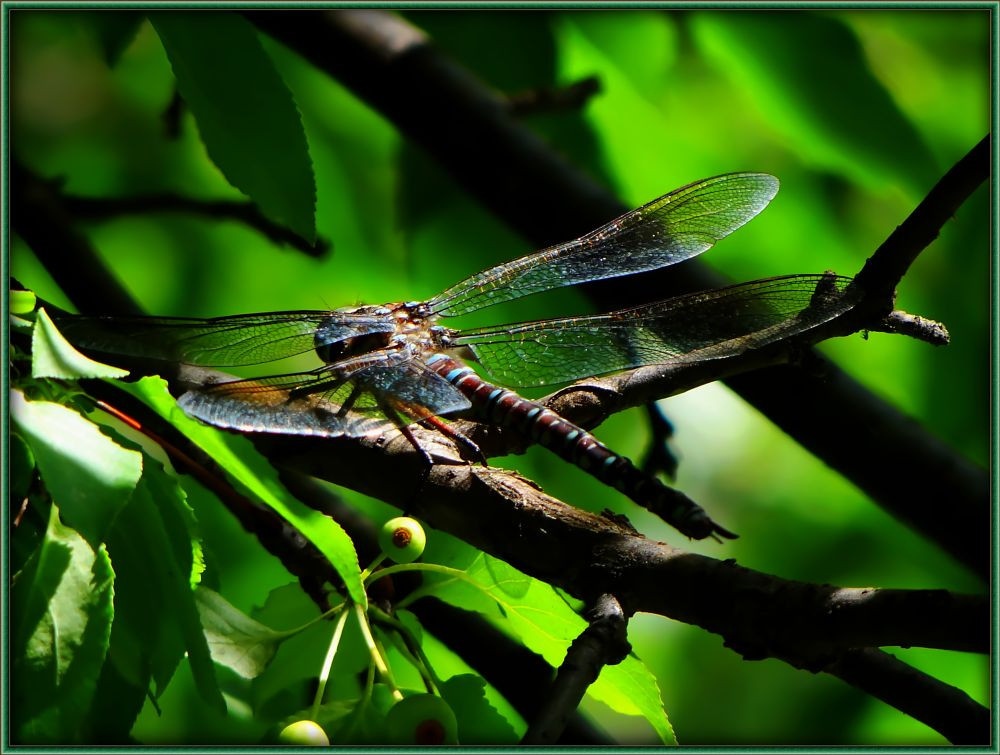 Photo in Nature #dragonfly