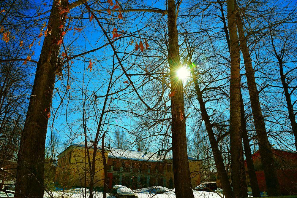 Photo in Random #sun