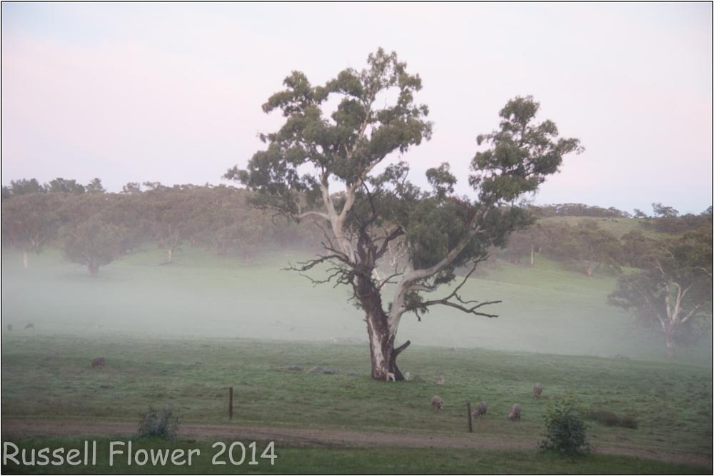 Photo in Landscape #mist #tree #mount crawford