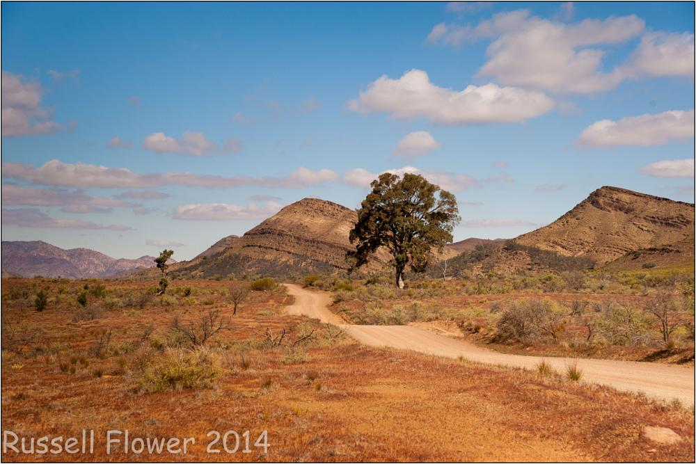 Photo in Landscape #blinman #country sa #flinders ranges #glass gorge road #road #tree