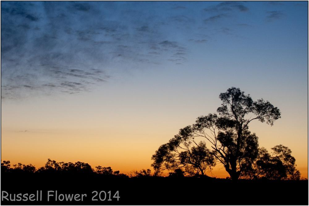 Photo in Landscape #brachina gorge road #country sa #flinders ranges #flinders trip #sunset #silhouette #tree