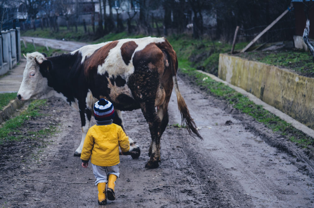Photo in Travel #travel #child #love #cow #nature