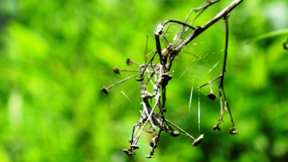 Photo in Lomo #plant #spider #nature #random