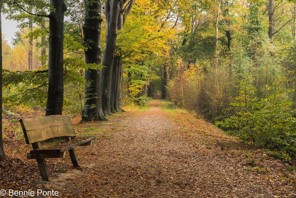Photo in Random #bakkeveen #friesland #bos #bomen #bankje #herfst #h&y filters