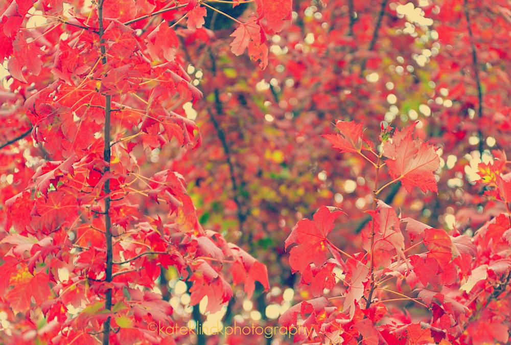 Photo in Nature #red #fall #autumn #leaves #tree #park #bokeh