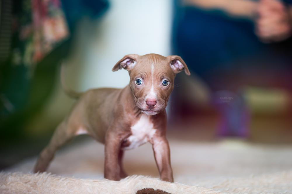 Photo in Animal #dog #animal #pet #cute #pets #portrait #bokeh #stoyan katinov #katinov #canon6d #canon #beautiful #glamour